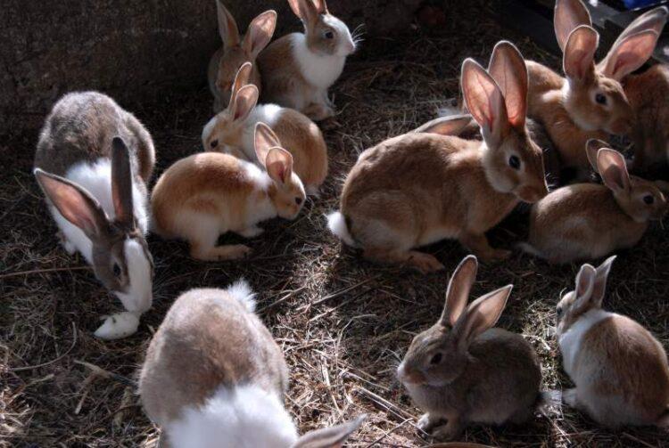 Her finder du kaniner til salg